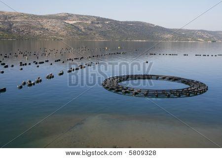 Mussels farming