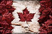 picture of canada maple leaf  - The image of the flag of Canada constructed entirely out of genuine maple leaves and white birch bark from species native to that country - JPG