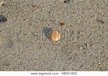 A beautiful shell on the beach sand