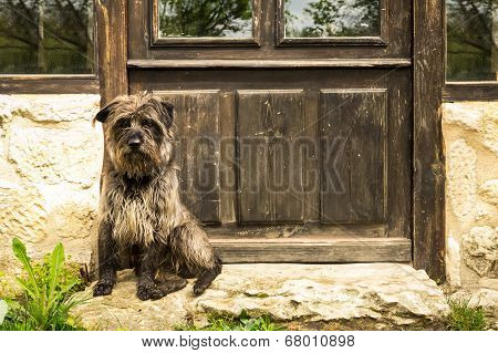 Dog Waiting In The Door