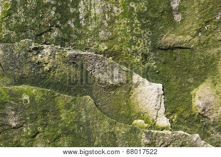 Background Mossy Limestone Rock