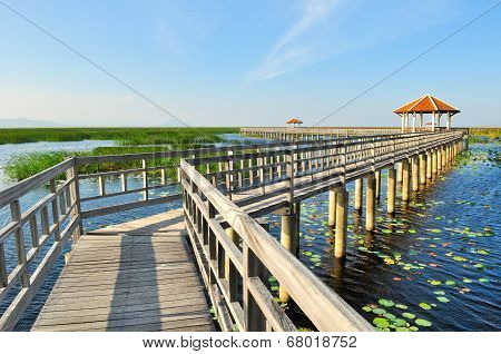 Walkway Bridge On The Lake In National Park