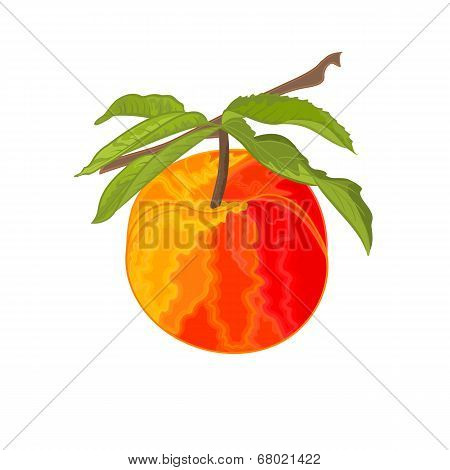 Peach Branch With Leaves Vector