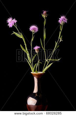 Brown Knapweeds In A Vase