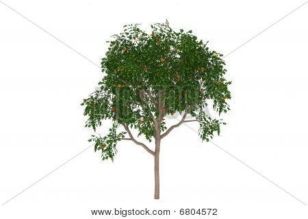 Orange tree tropical isolated