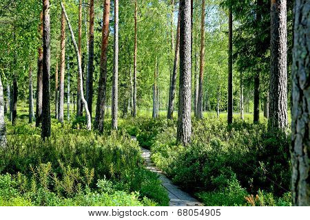 Path Through Green Forest At Summer