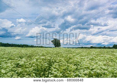 Field Freedom Fresh Landscape