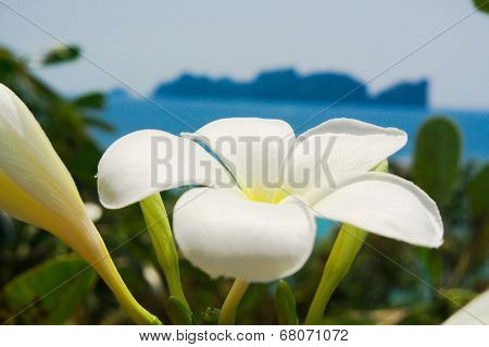 Tropical Verdure Blooming Trees