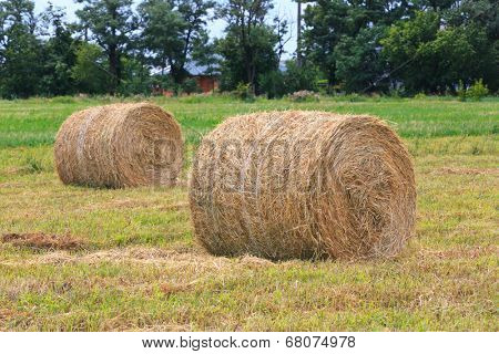 hay rolls on agricultural field  at summer time