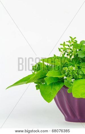 Herbs Arranged In A Bowl