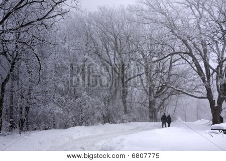 Lovers walking in the winter snowy woods