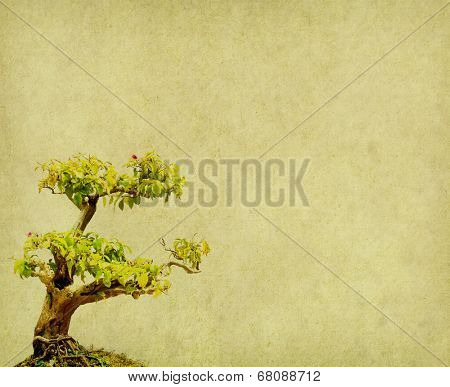 bonsai on old paper background
