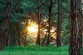 image of penetration  - Sun penetrating the bush at sunset or dusk