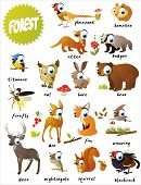 pic of badger  - forest animals - JPG
