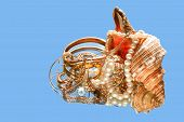 picture of conch  - Beautiful conch shell with various jewelry on blue background with reflection - JPG