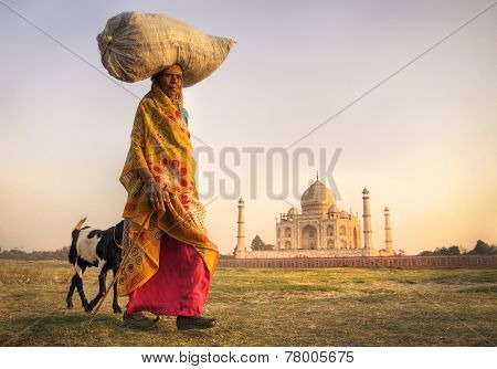 Indian woman carrying on head and goats near the taj mahal.
