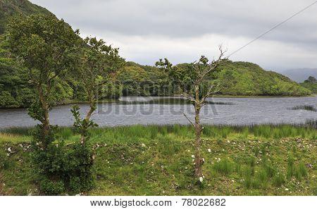 Beautiful National park Connemara.