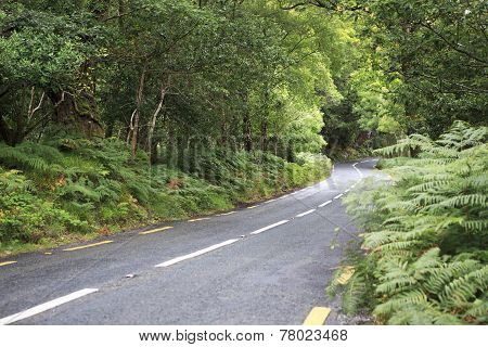 Beautiful road in the woods.