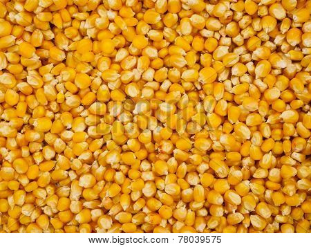 Corn Grains Background