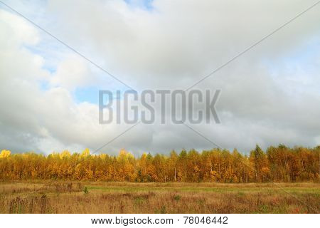 Yellow Trees On Edge Of Forest And Meadow With Dry Grass At Overcast Autumn Day