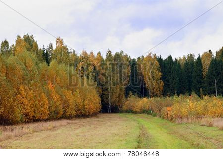 Yellow And Green Trees On Edge Of Forest At Overcast Autumn Day