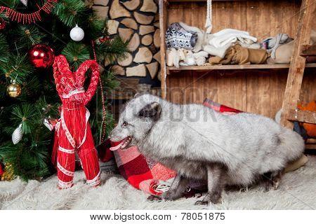 Polar or arctic fox, holidays, christmas, new year