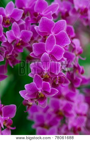 orchid flower - beauty in nature