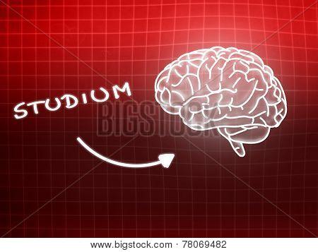 Studium Brain Background Knowledge Science Blackboard Red