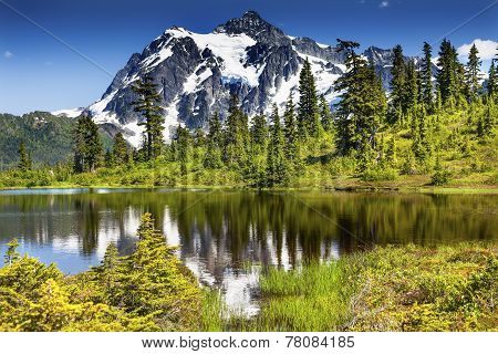 Picture Lake Evergreens Mount Shuksan Washington Usa