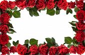 picture of rose bud  - Frame of red roses - JPG