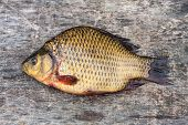 image of freshwater fish  - Live freshwater fish carp on a wooden board - JPG