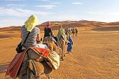 image of caravan  - Camel caravan going through the sand dunes in the Sahara - JPG
