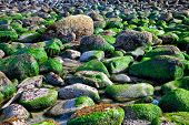 picture of eukaryote  - Rocky ocean shore after high tide background - JPG