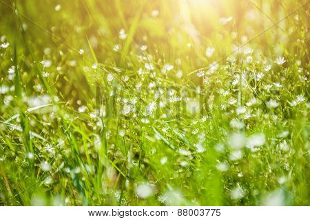 Wildflowers And Green Grass In The Field