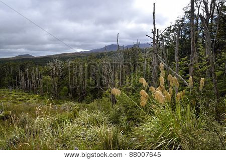 Tongariro Trail Landscape, New Zealand