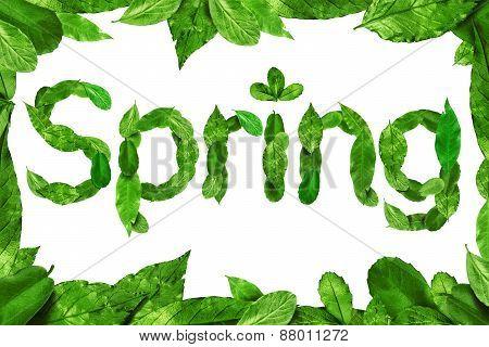 Leaves Spring Font