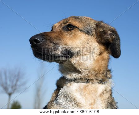 Mixed-breed Dog