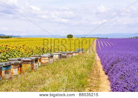 Bee Hives On Lavender Fields, Near Valensole, Provence.