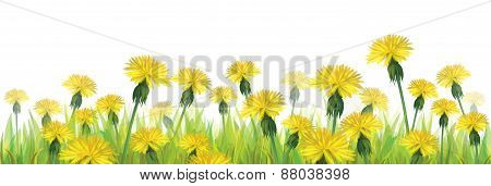 Vector yellow dandelions.
