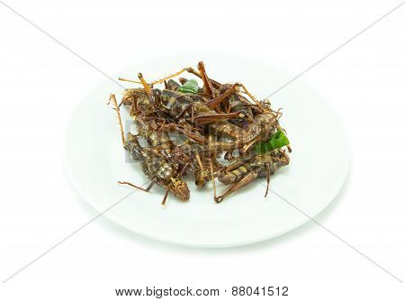 Fried Insects On White Dish