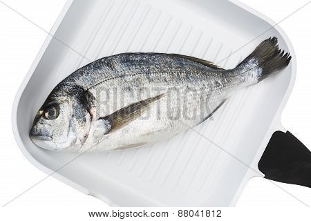 Guilt Head Bream