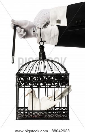 Magician holding cage with dove
