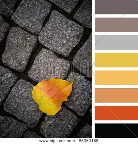 Single fallen leaf, in autumn colours, over dark cobblestone background. In a colour palette with complimentary colour swatches.