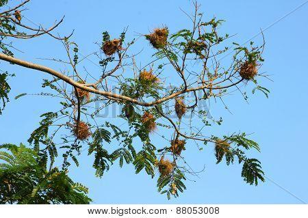 Bird's Nest on the tree