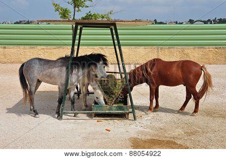 Skyros Pony Horses Hay Feeder
