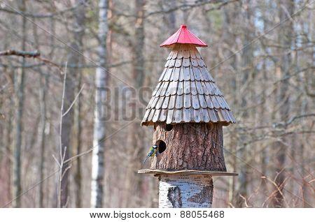 Bird feeder and tit