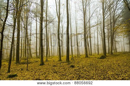 Fantasy Forest With Fog And Yellow Leaves