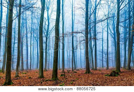 Magic Forest In Fog In Blue And Orange