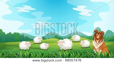 Sheeps and hound in the field