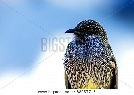 Black Bird With White Spots